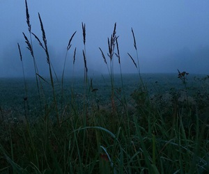 blue, fog, and nature image