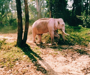 elephant, jungle, and pink image