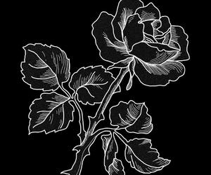rose, black, and art image