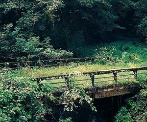 nature, bridge, and flowers image
