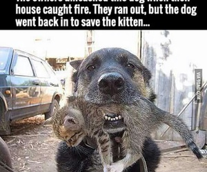 dog, cat, and fire image