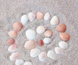 beach and seashells image
