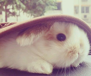 adorable, bunny, and kawaii image