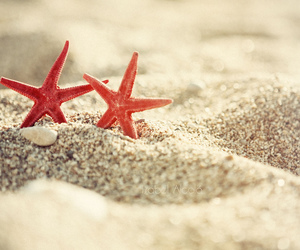 sand, starfish, and altea image