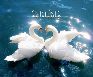 allah, animals, and islam image