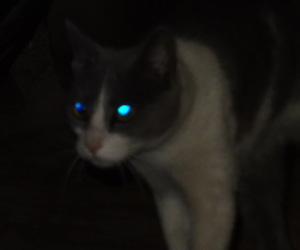 cat, pale, and picture image