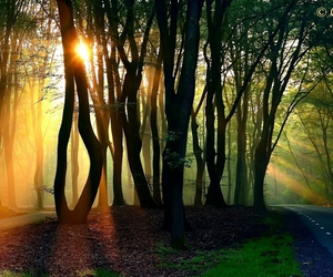 beautiful, forest, and landscape image