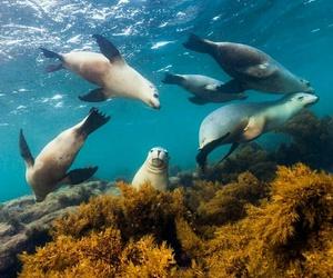 australia, nature, and wildlife image