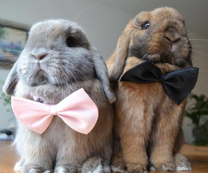 couple, pink & black, and rabbit image