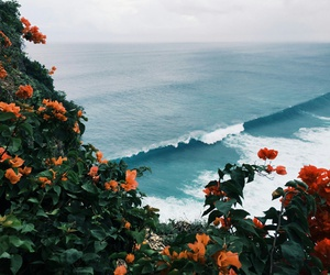 beach, flowers, and landscape image