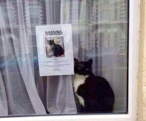 cat, funny, and missing image