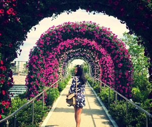 arches and flowers image