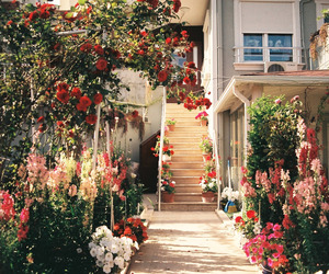 colourful, flower, and garden image