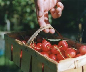 vintage and food image