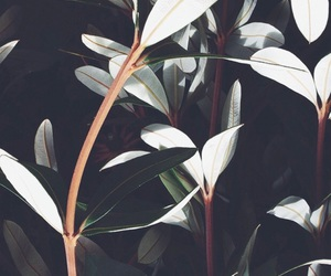 plants, wallpaper, and flowers image