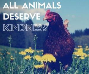 animals, Chicken, and food image