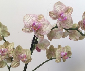 orchids, WITH, and obsessed image