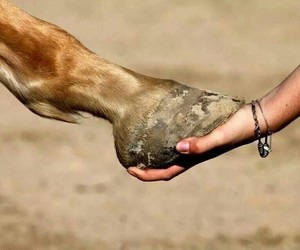 love and horse image