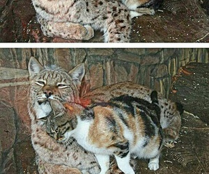 animals, aww, and cats image