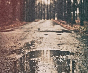 rain, forest, and photography image