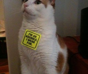 cat, funny, and fur image