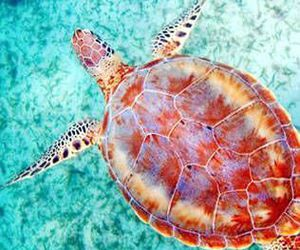 summer, turtle, and animals image