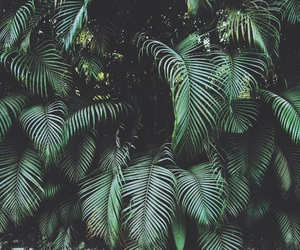 folhas, green, and tropical image
