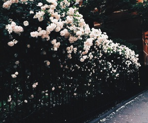 flowers, tumblr, and rose image