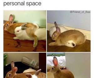 funny and bunny image