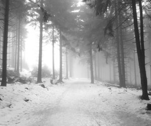 beautiful, black and white, and forest image