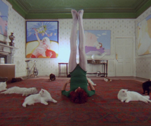 a clockwork orange and cats image