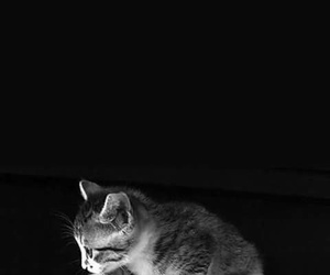 piano and cat image