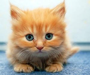 animal, animals, and kitten image