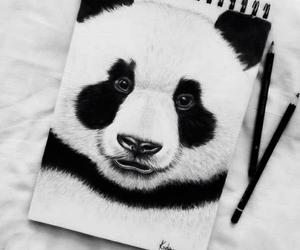 art, panda, and drawing image