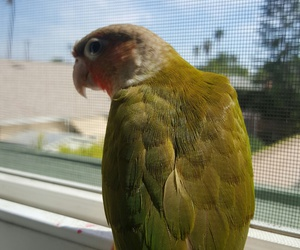 birb and cute image