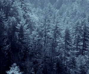 nature, forest, and snow image