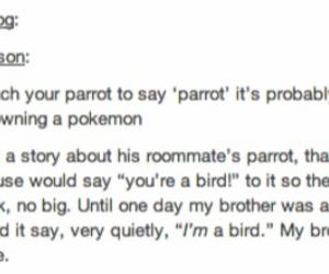 bird, funny, and tumblr image