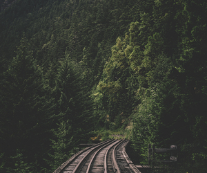 nature, forest, and railway image