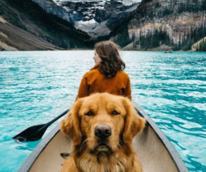 dog and travel image