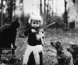 dog, cat, and music image
