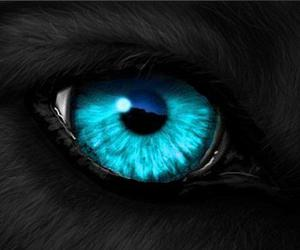 blue, eye, and animal image