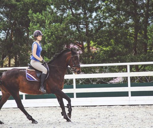 dressage, equestrian, and forest image