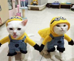 cat, minions, and animal image