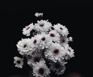 flowers, alternative, and dark image