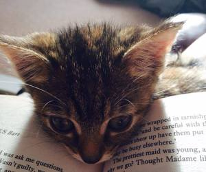 book, animal, and cat image