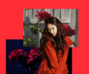 edit, red, and rose image