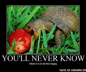 turtle, happy, and strawberry image