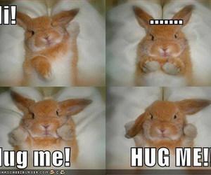 cool, rabbit, and hi image