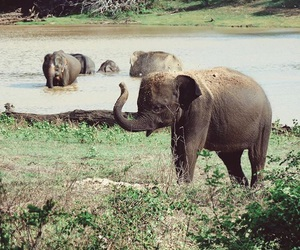 elephant, nature, and baby image
