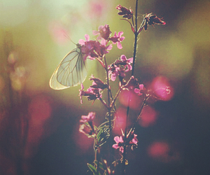 amazing, beautiful, and butterfly image
